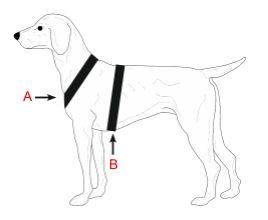 Niggeloh měření psa